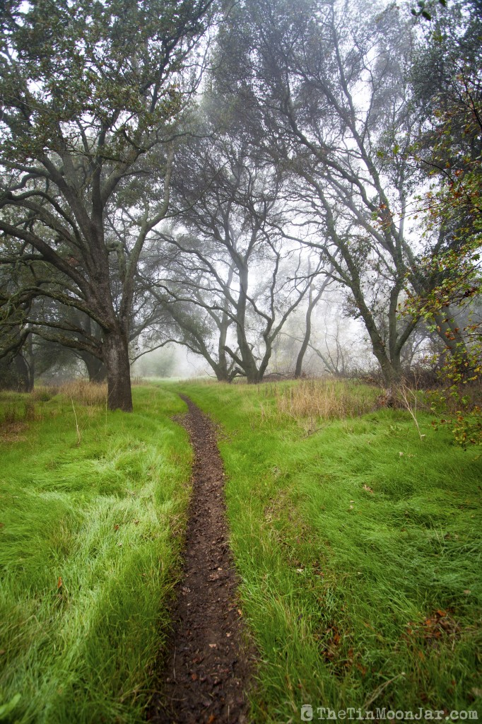 Fog on a winding trail