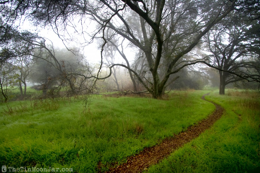 Fog on a winding trail with oak trees